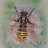 Hmyz 10