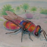 Hmyz 11