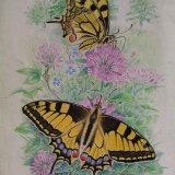 Hmyz 13
