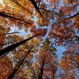 Stát jako strom 1