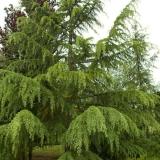Stát jako strom 12