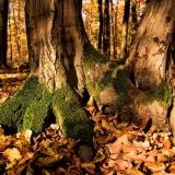 Stát jako strom 2