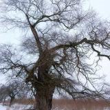 Stát jako strom 3