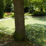 Stát jako strom 9